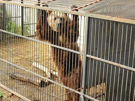 Зоопарк49