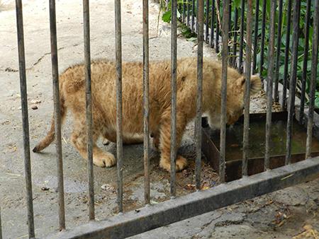 Зоопарк46