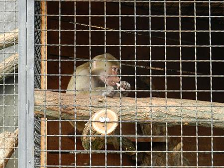 зоопарк01